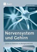 Nervensystem und Gehirn