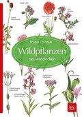 Wildpflanzen neu entdecken