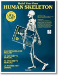 Build Your Own Human Skeleton - 1,80 m Life Size!