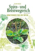 Spitz- und Breitwegerich - Plantago