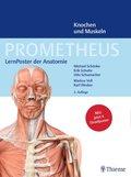 Prometheus: LernPoster der Anatomie, Knochen und Muskeln (4 Poster)
