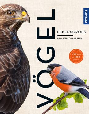 Vögel lebensgroß