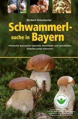 Schwammerlsuche in Bayern