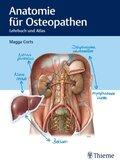 Anatomie für Osteopathen