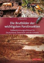 Die Brutbilder der wichtigsten Forstinsekten