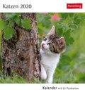 Katzen 2020 - Kalender, Tischkalender