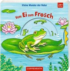 Kleine Wunder der Natur: Vom Ei zum Frosch