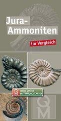 Jura-Ammoniten im Vergleich