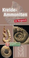 Kreide-Ammoniten im Vergleich