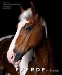 Pferde im Porträt