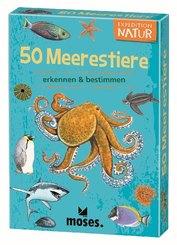 50 Meerestiere erkennen & bestimmen