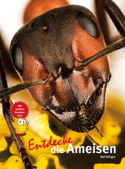 Entdecke die Ameisen