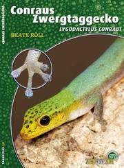 Conraus Zwergtaggecko