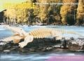 3D Puzzle Holzbausatz - Krokodil
