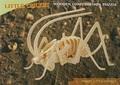 3D Puzzle Holzbausatz - Insekt, Grille