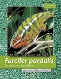 Furcifer pardalis (eBook, ePUB)