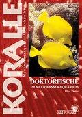 Doktorfische im Meerwasseraquarium (eBook, ePUB)