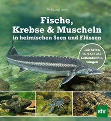 Fische, Krebse & Muscheln in heimischen Seen und Flüssen (eBook, ePUB)