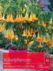 Kübelpflanzen (eBook, ePUB)
